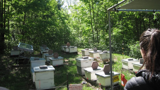 cheese and bees 078